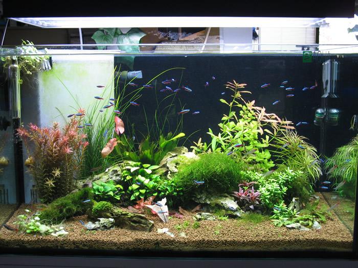 Piante Per Acquario Marino : Afp acquari piante e pesci tropicali ascom pesaro