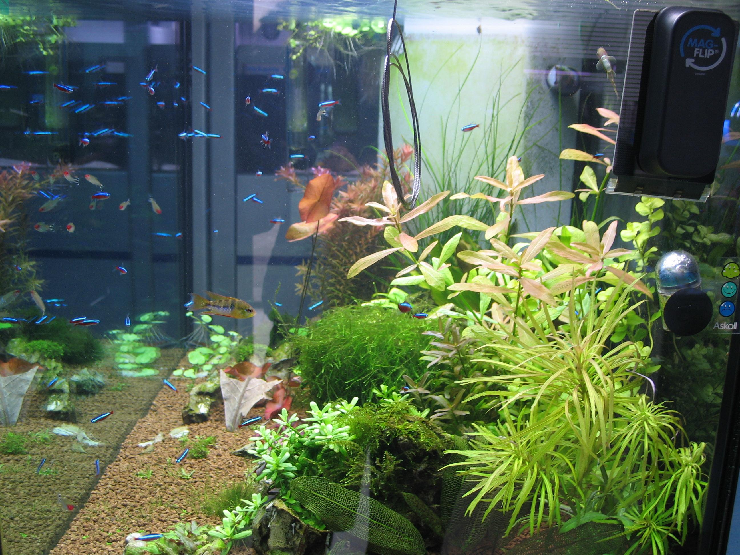 Afp acquari acquari piante e pesci tropicali ascom pesaro for Pesci tropicali acqua dolce