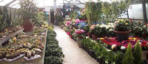 Garden clivia progettazione e realizzazione terrazzi e for Vendita piante giardino